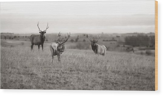 Wildlife Old School Wood Print