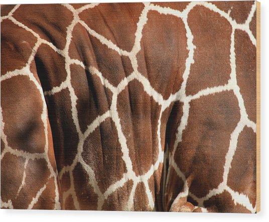 Wildlife Patterns  Wood Print
