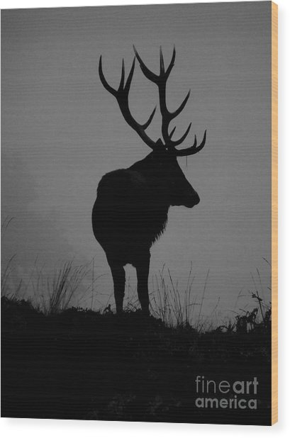 Wildlife Monarch Of The Park Wood Print