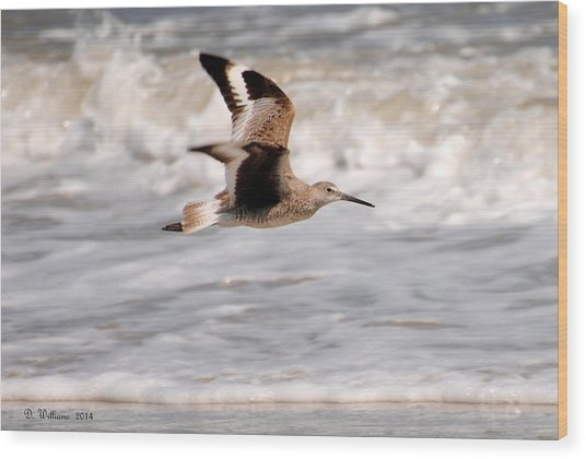 Willet In Flight Wood Print