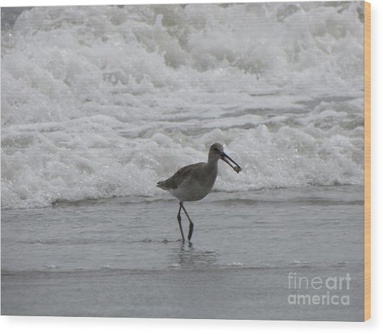 Willet With A Catch Wood Print by Gayle Melges