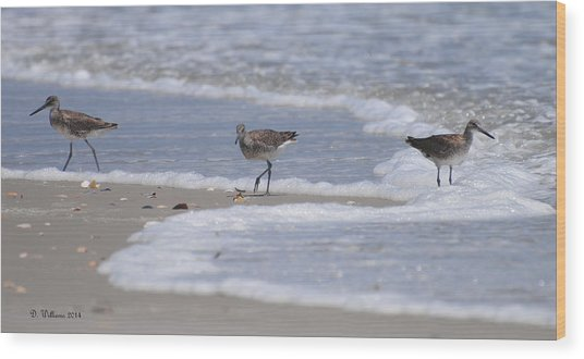 Willets On Ocracoke Wood Print