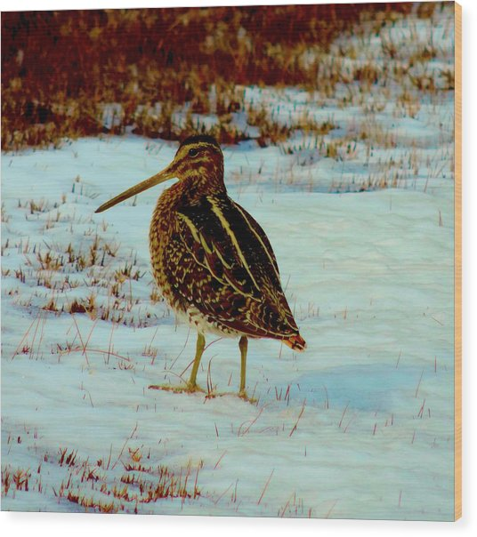 Wilson's Snipe 1 Wood Print by Stephanie Kendall