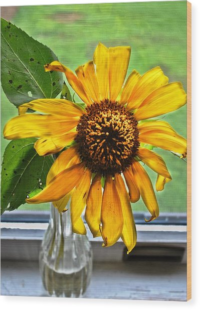 Wilting Sunflower In Window Wood Print