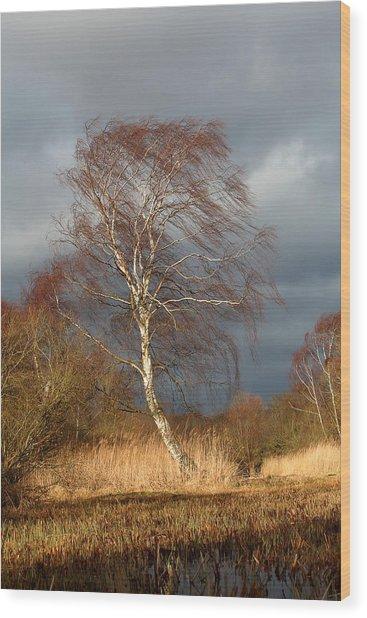 Wind Direction Wood Print