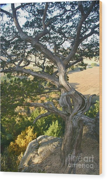 Wind Twisted Tree Wood Print