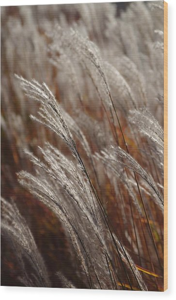 Windblown Grass Wood Print