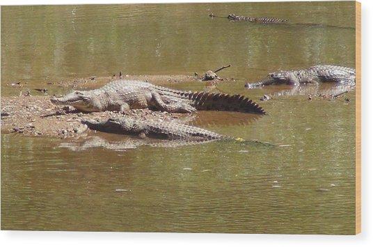 Windjana Crocodiles Wood Print