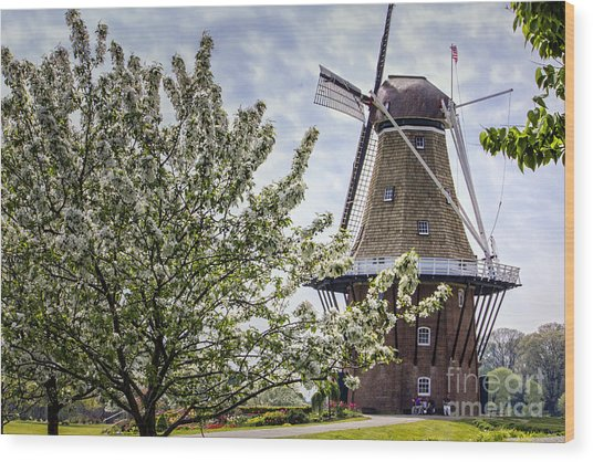 Windmill At Windmill Gardens Holland Wood Print
