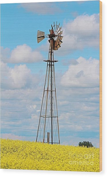 Wood Print featuring the photograph Windmill In Canola Field by Ann E Robson