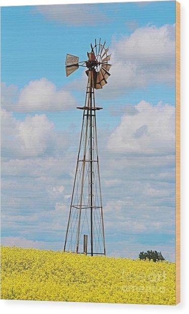 Windmill In Canola Field Wood Print