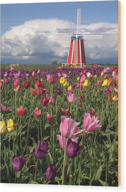 Windmill In The Tulips Wood Print