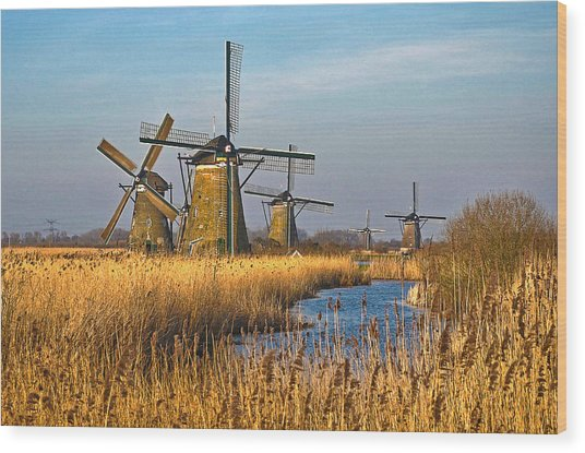 Windmills And Reeds Near Kinderdijk Wood Print
