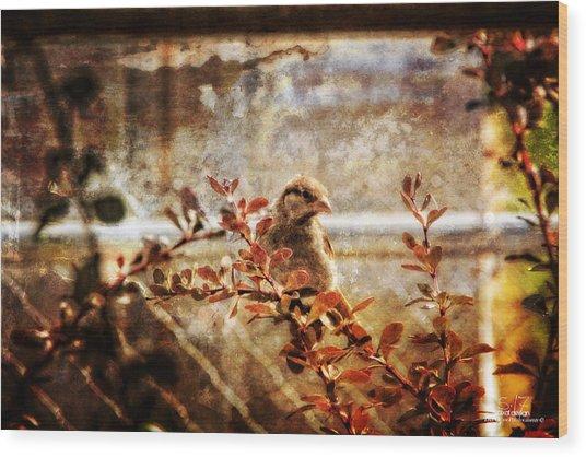 Window Wren Wood Print by Dan Quam