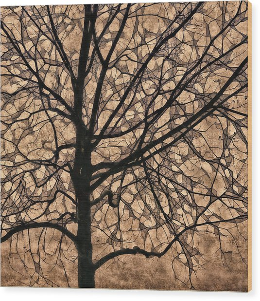 Windowpane Tree In Autumn Wood Print