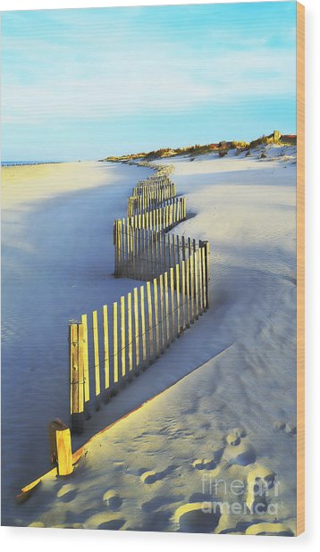 Windswept At Sunset - Jersey Shore Wood Print