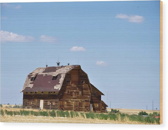 Windswept Colorado Barn Wood Print