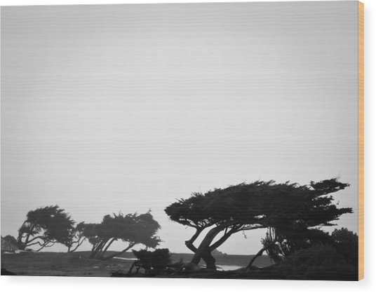 Windswept Shoreline Wood Print