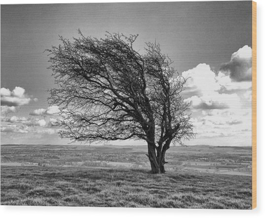 Windswept Tree On Knapp Hill Wood Print