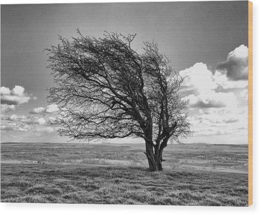 Windswept Tree On Knapp Hill Wood Print