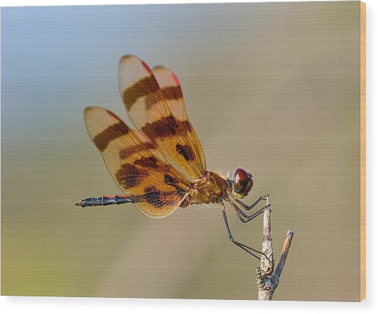 Windy Day Dragonfly Wood Print