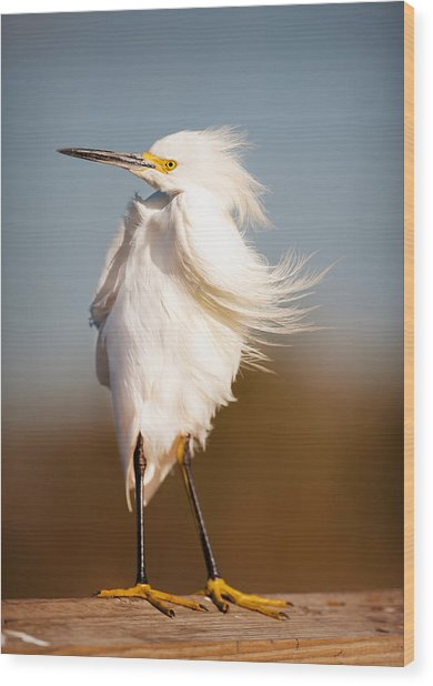 Windy Egret Wood Print by Tammy Smith