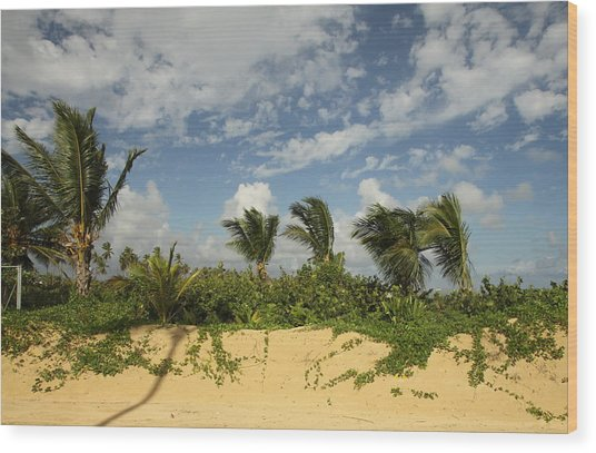 Windy Palms Wood Print
