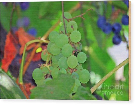 Wine Beginnings Wood Print