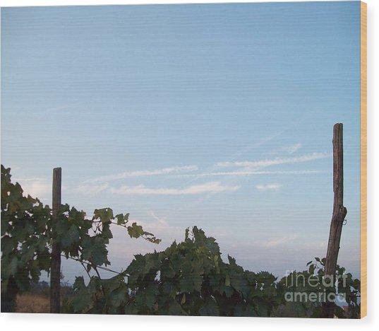 Wine Yards In Loppiano Wood Print