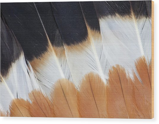 Wing Fanned Out On Northern Lapwing Wood Print