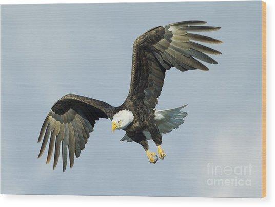 Wing Flare Wood Print by John Blumenkamp