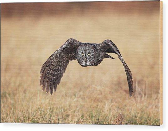 Wings Of Motion Wood Print