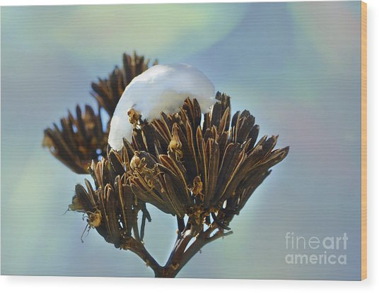 Winter Agave Bloom Wood Print