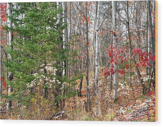 Winter Beginning Wood Print by Carolyn Reinhart