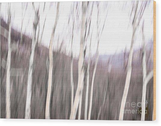 Winter Birches Tryptich 2 Wood Print
