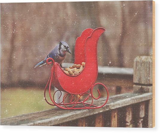 Winter Blue Jay #3 Wood Print