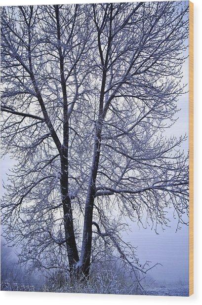 Winter Tree In Blue Fog Wood Print