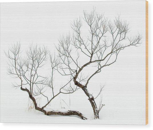 Winter Bonsai Wood Print