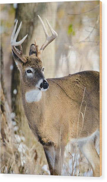 Winter Buck Wood Print