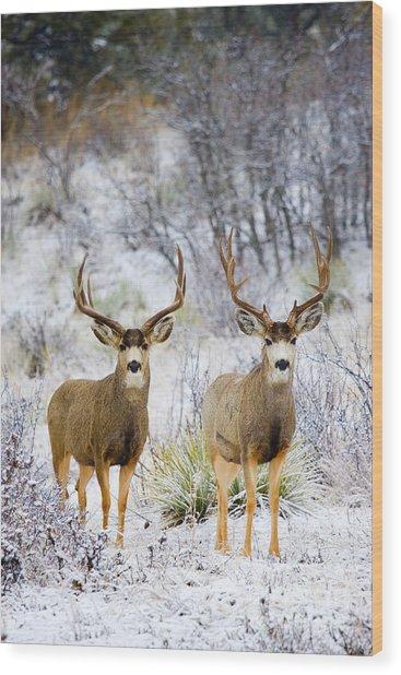 Winter Bucks Wood Print