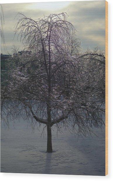 Winter Candelabrum Wood Print