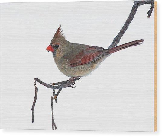 Winter Cardinal II Wood Print