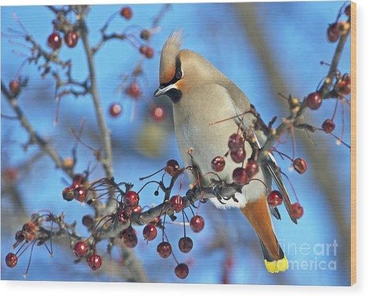 Winter Colors.. Wood Print