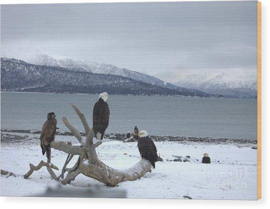 Winter Eagles Wood Print