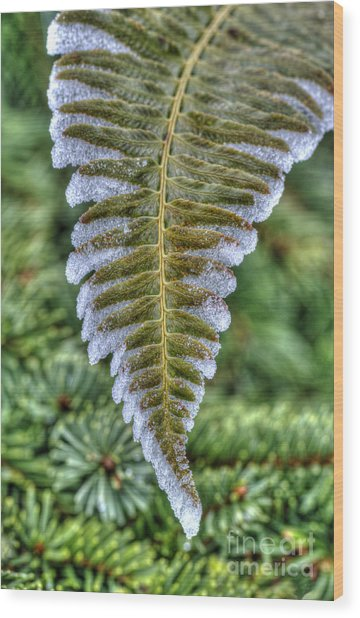 Winter Fern Wood Print by Sarah Schroder