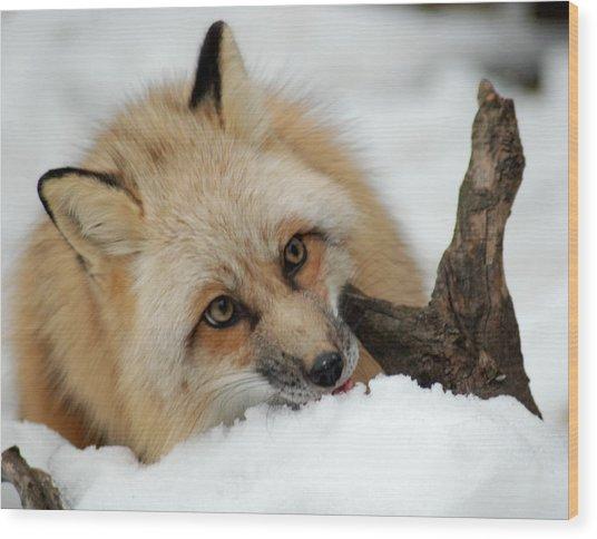 Winter Fox 2 Wood Print