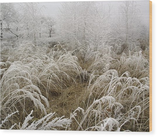 Winter Grass Wood Print by Magdalena Mirowicz