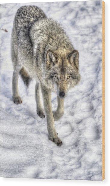 Winter Hunter Wood Print
