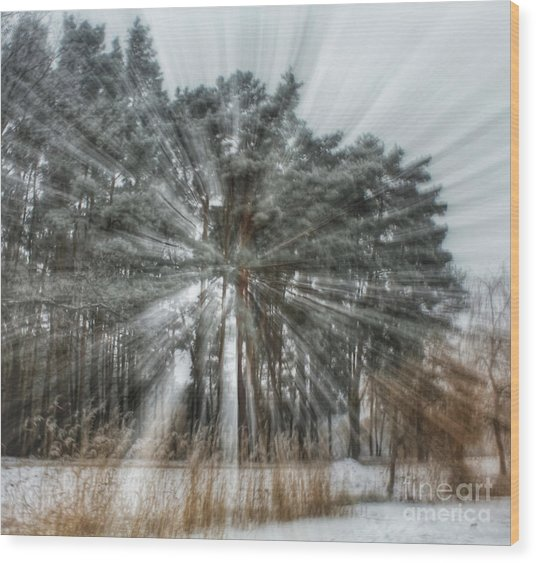 Winter Light In A Forest Wood Print