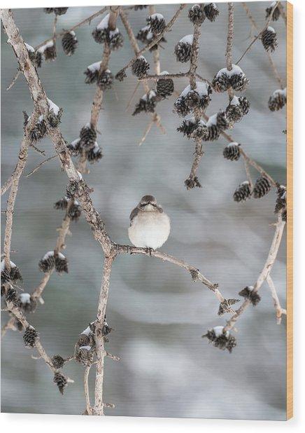Winter Mockingbird Wood Print